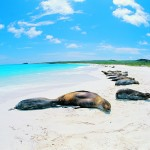 Galapagos, l'ultimo paradiso terrestre