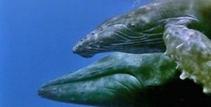 Le Balene Humback