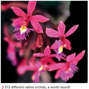 Orchidee Machu Picchu > Perù