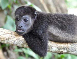 monkey_ruta40